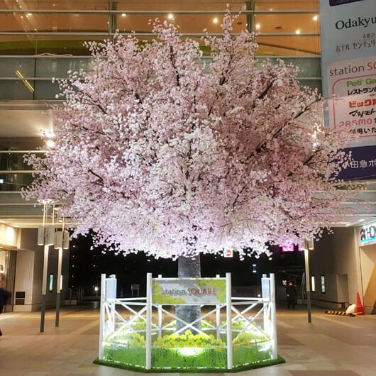 相模大野ステーションスクエア桜